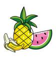 delicious fruits cartoon vector image