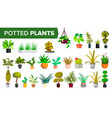 potted plants set green color plants vector image vector image
