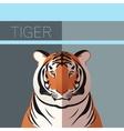 Tiger flat postcard vector image