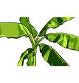 banana palm tree design vector image vector image