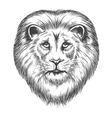 hand drawn lion head vector image vector image