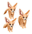 three standing sandy foxes of different sizes vector image