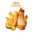 pumpkin watercolor isolated fall season vector image vector image