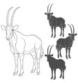 set with oryx antelope vector image
