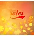 Autumn sale design template vector image vector image