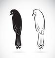 Drongo Bird vector image