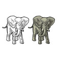 elephant engraving vintage color vector image vector image