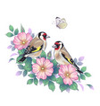 hand drawn goldfinches sitting on dog-rose branch vector image