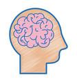 silhouette man with anatomy brain design vector image