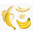 banana realistic healthy natural exotic fruits vector image