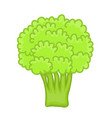 green broccoli isolated vector image
