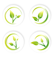 Green Sprout Leaf vector image vector image