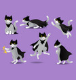 set of superhero cat in black mask and cloak vector image