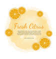 citrus banners design for juice tea ice vector image vector image