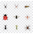 set of insect realistic symbols with tarantula vector image