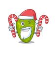 friendly cyanobacteria in santa cartoon character vector image vector image