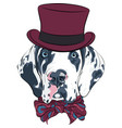 spotted dog great dane breed vector image vector image