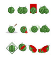 twelve variants of watermelon vector image