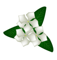 Cape Periwinkle Flowers or Madagascar Periwinkle vector image vector image