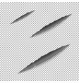 claws scratches on paper vector image vector image