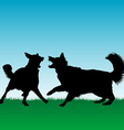 Dogs fighting or playing outdoors vector image