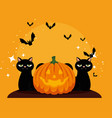 halloween card with pumpkin and cats blacks vector image vector image