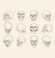 human skull anatomy pictures head bones vector image