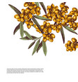 background with hand drawn sea buckthorn branches vector image vector image