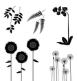 Meadow weeds silhouettes vector image