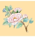 watercolor chinese peony flower vector image