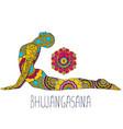 bhujangasana or cobra pose vector image vector image