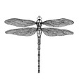 black dragonfly vector image vector image