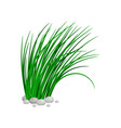 bush of tall green grass vector image