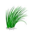 bush tall green grass vector image