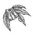 goji berries hand drawn sketch fruit vector image vector image