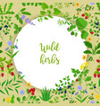 wild herbs and berries circle frame vector image