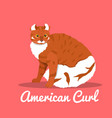 american curl cat on pink background vector image vector image