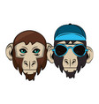 hipster monkeys cool sketch vector image