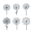 tender dandelions on thin stems monochrome vector image