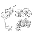 hand drawn orchid vector image vector image