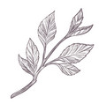 small sapling or branch with leaves monochrome vector image