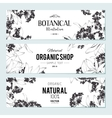 Plants and herbs banners set vector image