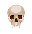 skull stylized cartoon vector image