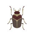bug beetle insect species top view flat vector image vector image
