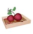 Christmas Apples and Spices in Wooden Container vector image vector image