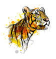 Colored hand sketch of a young tiger vector image vector image