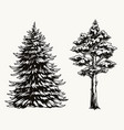 fir and pine trees vintage template vector image vector image