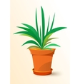 green Chlorophytum plant in a pot vector image vector image