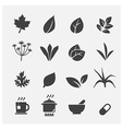 herb icon vector image vector image