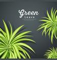pandanus tree green leaves background vector image vector image